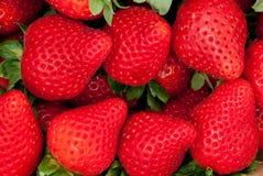 вкусные красные клубники Стоковая Фотография