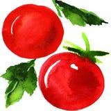 Вкусные красные томаты Стоковое Фото