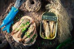 Вкусные сардины wirh сандвича и wholegrain хлеб Стоковая Фотография RF