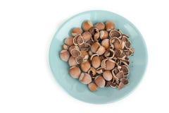 Вкусные фундуки в поддоннике изолированном на белизне Стоковые Фотографии RF