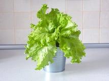 Вкусный зеленый салат в сером ведерке металла Крупный план вид спереди Стоковые Изображения RF