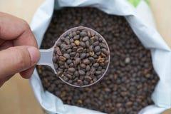 Владение руки фермера женщины ложка и семя погружения высококачественное от Стоковое Изображение