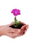 владение рук цветка Стоковое фото RF