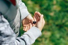 Владения мальчика захватили жука в его руке Стоковое Фото
