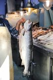 Владения продавца в его вручают большие семг или Salmo Салара в греческом магазине рыб Стоковая Фотография RF