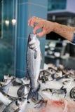 Владения продавца в его вручают свежих европейских морского волка или labrax Dicentrarchus, lavpaki в греческом магазине рыб Стоковая Фотография