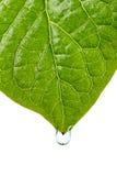влажная вода листьев падения Стоковые Изображения RF