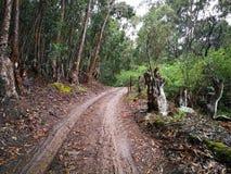 Влажная грязная улица в лесе на ферме на дождливый день Стоковое Изображение