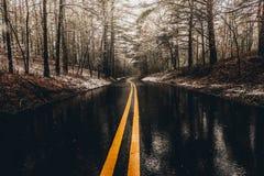 Влажная дорога в лесе стоковое фото rf