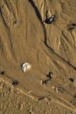 Влажная предпосылка раковины камешков текстуры песка пляжа Стоковое Фото