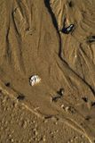 Влажная предпосылка раковины камешков текстуры песка пляжа Стоковая Фотография