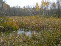 Влажное озеро в лесе Стоковые Изображения RF