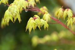 Влажные листья детенышей Стоковое Изображение RF