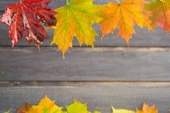 Влажные листья осени на деревянной предпосылке Стоковая Фотография RF