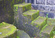 Влажные шаги с преследовать водорослями - плохой крытой окружающей средой - и ужасом - больным синдромом здания стоковые изображения