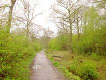 Влажный путь - идущ на скучный день стоковые фотографии rf