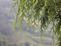 Влажный tamarisk стоковые фото