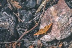 влияние пастельного цвета бабочки на том основании - винтажное Стоковое фото RF