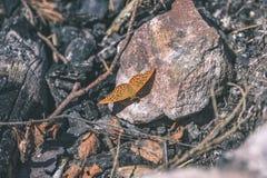 влияние пастельного цвета бабочки на том основании - винтажное Стоковое Изображение