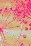 Влияние duotone колеса Ferris Стоковое фото RF
