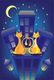 влюбленнаяся котами крыша ночи Стоковое фото RF