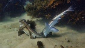 Влюбленность более странна все еще под морем стоковое фото rf