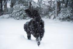 Влюбленность валентинки xmas рождества santa собаки Ньюфаундленда милая Стоковые Изображения