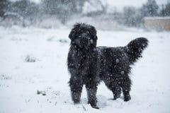 Влюбленность валентинки xmas рождества santa собаки Ньюфаундленда милая Стоковое Изображение