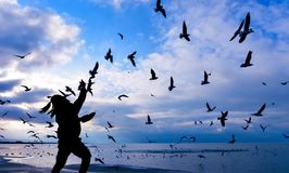 влюбленность, интерес и восторг ` s чайки стоковые фото