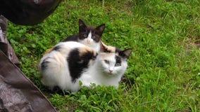 Влюбленность кота Momma стоковое фото