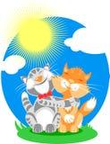 влюбленность котов Стоковые Фотографии RF