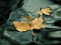 влюбленность листьев Стоковое Изображение