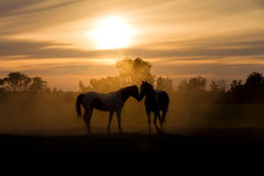 влюбленность лошадей Стоковые Фото