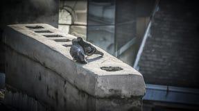 Влюбленность на крыше Стоковые Фотографии RF
