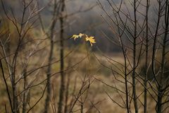 влюбленность осени в лесе Стоковое Изображение