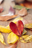влюбленность осени i Стоковое Фото