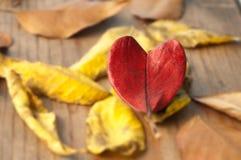 влюбленность осени i Стоковая Фотография