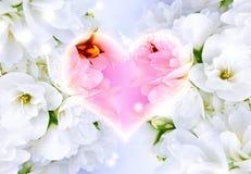 влюбленность предпосылки красивейшая Стоковая Фотография