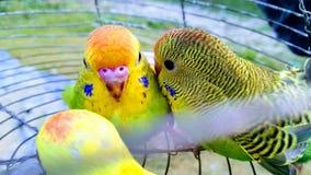 Влюбленность птиц стоковое фото rf
