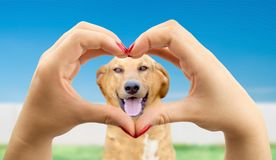 влюбленность собаки i моя стоковые изображения rf