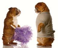 влюбленность собак понижаясь Стоковые Изображения
