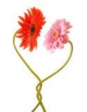 влюбленность цветка стоковое изображение rf