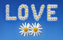 влюбленность цветков Стоковые Фото