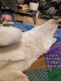 Влюбленность щенка стоковое изображение rf