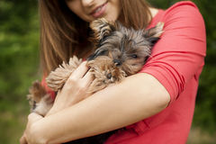 Влюбленность щенка Стоковые Фото