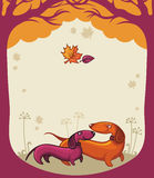 влюбленность dachshunds Стоковые Фото