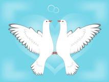 влюбленность dove Стоковое Изображение RF