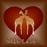 влюбленность giraffes Стоковые Изображения