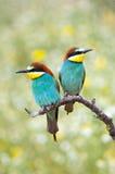 влюбленныеся птицы стоковая фотография