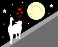 влюбленныйся кот Стоковая Фотография